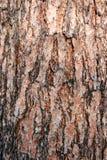 Corteza de árbol de pino de la textura Imagen de archivo libre de regalías