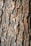 Corteza de árbol de pino de la textura imagen de archivo