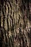 Corteza de árbol de roble Imagen de archivo libre de regalías