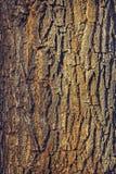 Corteza de árbol de roble Imágenes de archivo libres de regalías