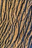 Corteza de árbol de roble fotografía de archivo