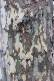 Corteza de árbol del estilo de Camo Imagen de archivo