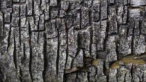 Corteza de árbol del fondo foto de archivo libre de regalías