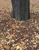 Corteza de árbol del otoño fotografía de archivo libre de regalías