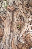 Corteza de árbol detalladamente Imagenes de archivo