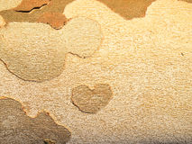 Corteza de árbol Detalle de una corteza de árbol Fotos de archivo