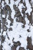 Corteza de árbol en la estación del invierno Imágenes de archivo libres de regalías