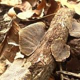 Corteza de árbol en la tierra Foto de archivo