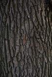 Corteza de árbol en naturaleza Imagen de archivo