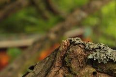 Corteza de árbol Forest Foreground And Green Background de madera foto de archivo