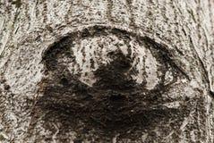 Corteza de árbol formada como ojo Foto de archivo libre de regalías