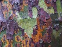 Corteza de árbol húmeda de un árbol plano horizontal Fotografía de archivo