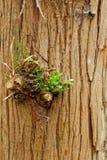 Corteza de árbol hermosa Fotos de archivo