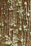 Corteza de árbol hermosa Imágenes de archivo libres de regalías