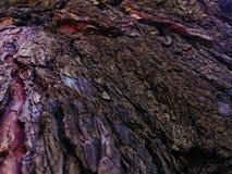 Corteza de árbol inclinada Foto de archivo