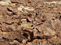 Corteza de árbol de la peladura Fotos de archivo