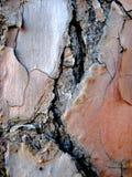 Corteza de árbol macra de pino Foto de archivo