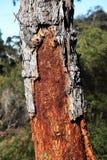 Corteza de árbol de madera inusual Fotos de archivo