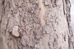 corteza de árbol marrón Fotos de archivo