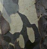 Corteza de árbol modelada. Foto de archivo libre de regalías