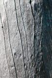 Corteza de árbol muerta Fotografía de archivo