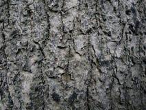 Corteza de árbol para el papel pintado foto de archivo