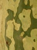 Corteza de árbol plano Foto de archivo libre de regalías