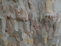 Corteza de árbol plano imagen de archivo libre de regalías