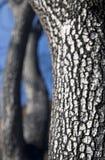 Corteza de árbol quemada Fotos de archivo libres de regalías