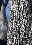 Corteza de árbol quemada Foto de archivo libre de regalías