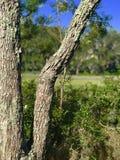 Corteza de árbol rústica Imagen de archivo libre de regalías