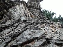 Corteza de árbol sobre una inspección más cercana imagenes de archivo
