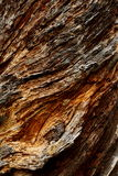 Corteza de árbol textured áspera Foto de archivo libre de regalías