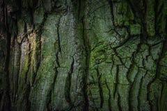 Corteza de árbol verde oscuro en el bosque Foto de archivo libre de regalías