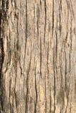 Corteza de árbol vieja Foto de archivo