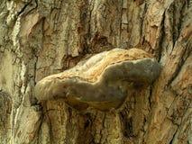 Corteza de árbol vieja Imagen de archivo libre de regalías