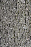 Corteza de árbol vieja Fotografía de archivo libre de regalías