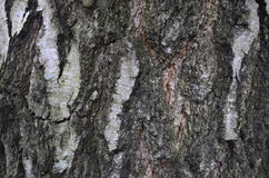 Corteza de árbol vieja Imagenes de archivo