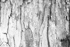 Corteza de árbol vieja Fotos de archivo