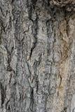 Corteza de árbol vieja Imágenes de archivo libres de regalías