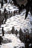Corteza de árbol viva Fotos de archivo