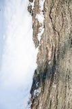 Corteza de árbol y nieve blanca Imagenes de archivo