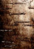 Corteza de abedul Imagen de archivo
