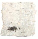 Corteza de abedul Imagenes de archivo