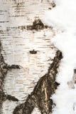 Corteza de abedul, abedul del tronco de la textura, Fotos de archivo