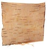 Corteza de abedul aislada en el fondo blanco Imagenes de archivo
