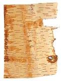 Corteza de abedul aislada en un fondo blanco Foto de archivo libre de regalías
