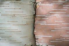 Corteza de abedul blanca y rosada Imágenes de archivo libres de regalías