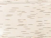 Corteza de abedul como fondo Foto de archivo
