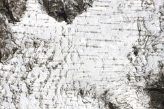 Corteza de abedul con textura natural del abedul Imagenes de archivo